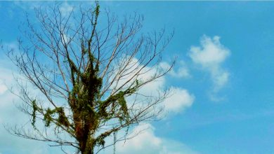 RIP #InstagramTree: Our Tree-bute To The Punggol Landmark