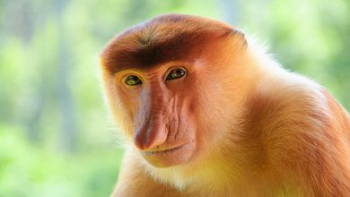 Imagining Your Relatives As Monkeys